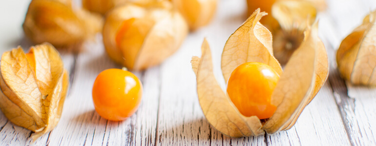 Ashwangandha Früchte