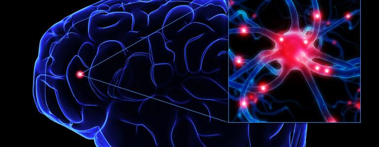 Gehirn nervenzelle small - Knochenstoffwechsel und Mineralienstoffwechsel