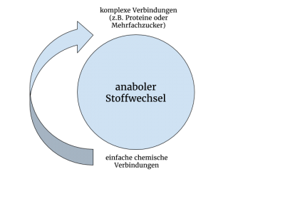 Stoffwechsel - Definition