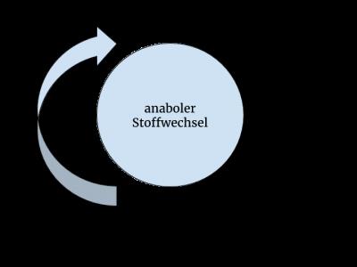 Stoffwechsel - Definition