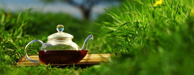 Mit Tee den Stoffwechsel anregen
