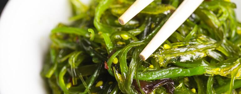 spirulina essen - Spirulina – Ein alternativer Nährstofflieferant